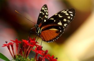 butterfly garden in your RV